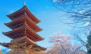 nursing job japan 300x180 Japan wants Filipino Nurses and Caregivers