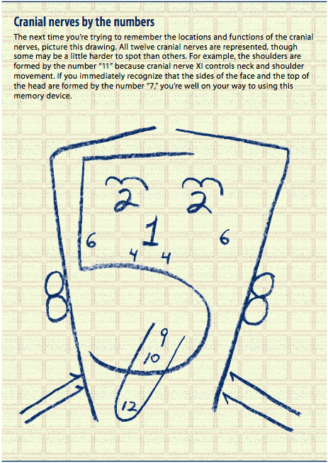 Tricks to Remember the Cranial Nerves | Circle of Docs