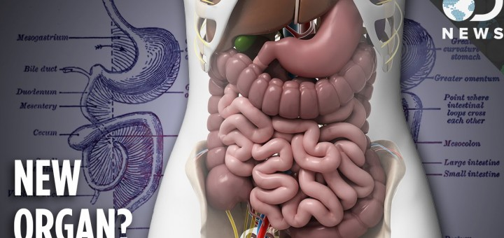 Mesentery is now an organ