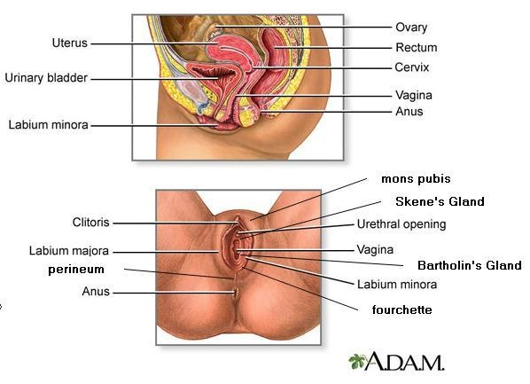 anatomy-of-female-reproductive-system1.jpg