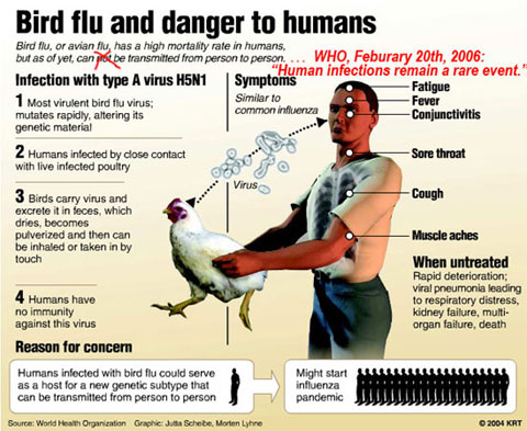 bird flu Bird Flu Virus