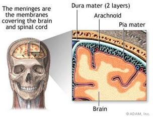 brain membrane thumb Schizophrenia Case Study