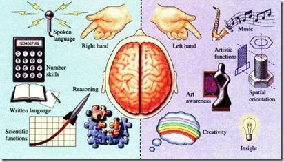 cerebralhemispheresfunctions thumb Schizophrenia Case Study
