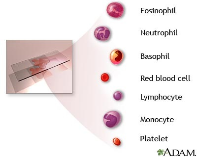 Complete Blood Count Cbc Normal Laboratory Study Values