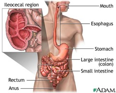 crohns disease thumb Crohns Disease