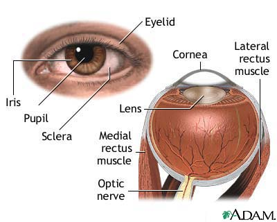 Anatomy and Physiology: Special Senses – The EYES - Nursing Crib