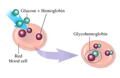 Glycosylated Hemoglobin