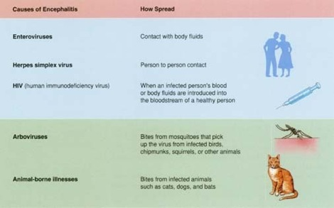 how encephalitis is spread