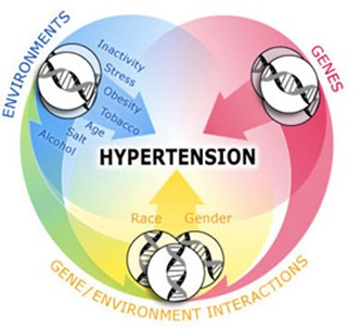 Hypertension Chart