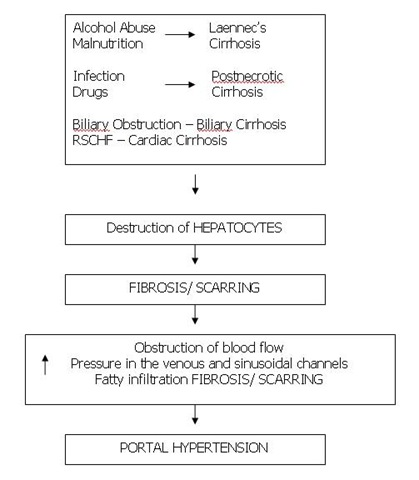 treatment of cirrhosis of the liver nursing essay Liver cirrhosis has many possible causes treatment for hepatitis-related cirrhosis involves medications used to treat the different types of hepatitis as it would add to the already high total body sodium content that typically occurs in cirrhosis palliative care.