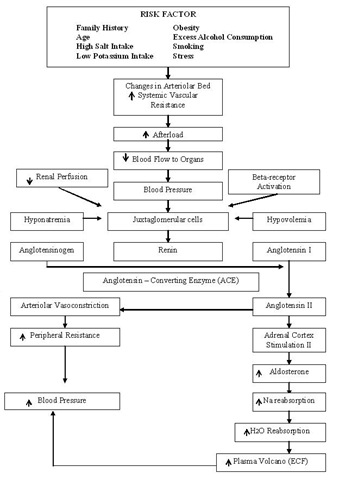 pathophysio-hypertension.jpg