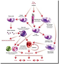pathophysiology of leukemia