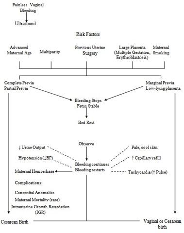 Placenta    Previa Case Study  Nursing Crib