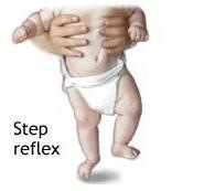 step reflex thumb Newborn Reflexes