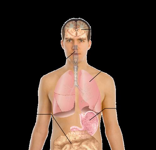 DOMUZ GRİBİ (SWINE FLU) (H1N1) İLE İLGİLİ MERAK EDİLENLER: Swine-flu
