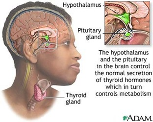 thyroid thumb1 Nursing Care Plan   Hyperthyroidism